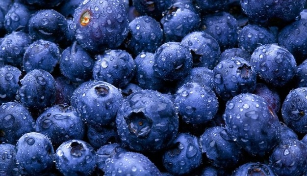 Experts say what the price of the first Ukrainian blueberry will be