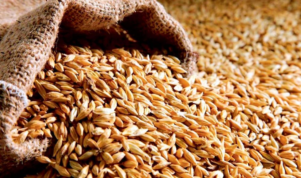 Ukraine in the new season exported more than 25 million tons of grain