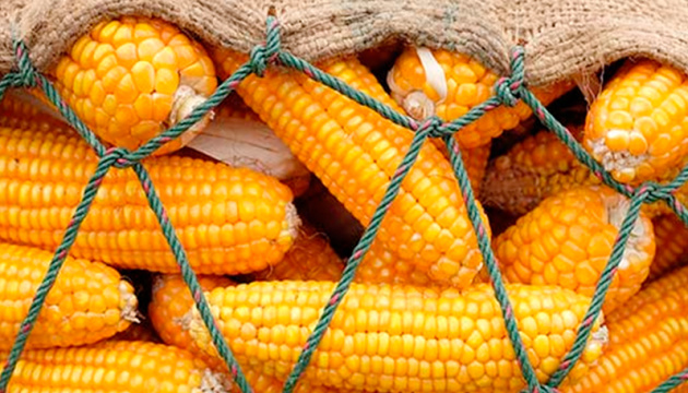 Ukrainian agroexport: what we sell and who buys