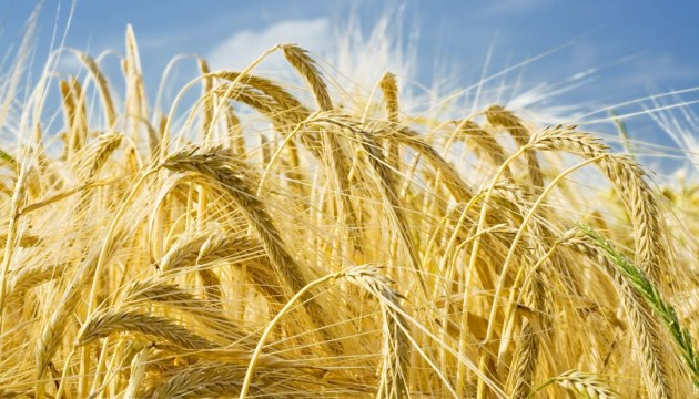 Ukraine is the third in the world in terms of agricultural exports to the EU